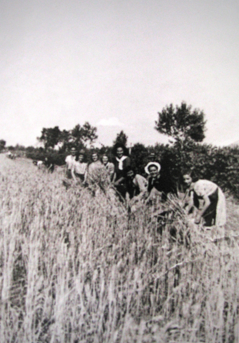 wheat harvest 1930s