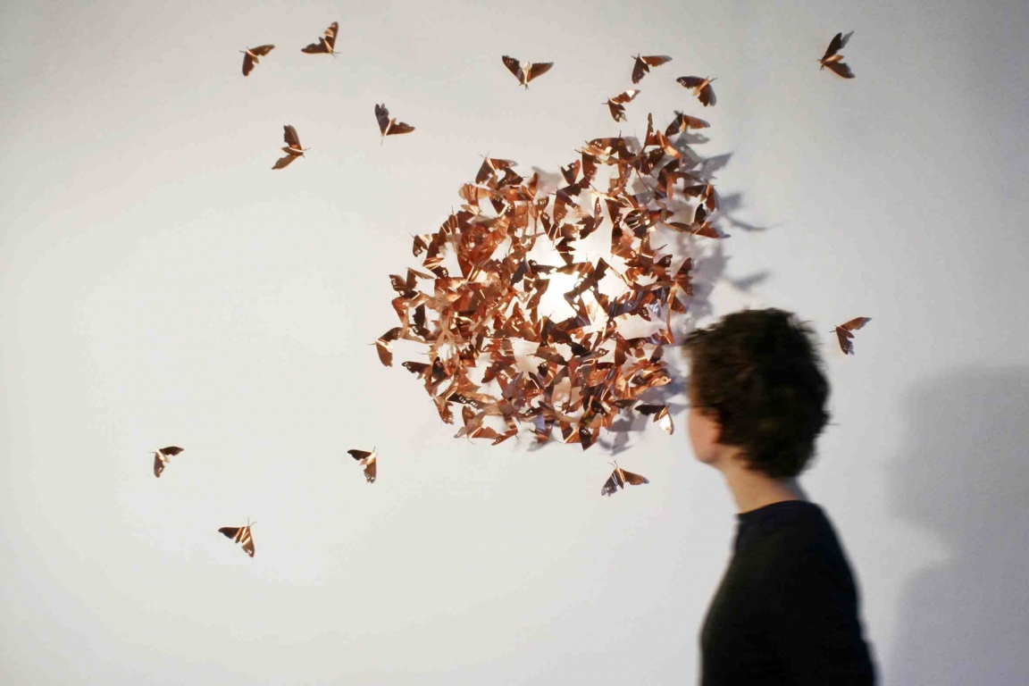 copper butterflies