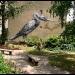 roa-birds-1