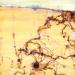 lake-eyre-the-desert-sea-iii
