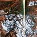 kibera kenya