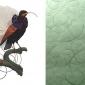 calligraphy-bird-