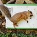 nyc-squirrels