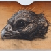 falco-berigora-kirrkirlanji-brown-falcon-head-2011