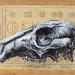 macropus-giganteus-gunguruu-grey-kangaroo-skull-2011