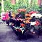 paoal lenti garden flowers (1).jpg