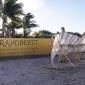 strandbeest-art-basel-miami-8
