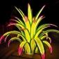 taronga zoo plant vivid sydney 2017