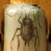 blattaria-cockroach-2011