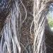 twigs-99
