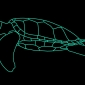 taronga zoo ferry turtle vivid sydney 2017 (8)