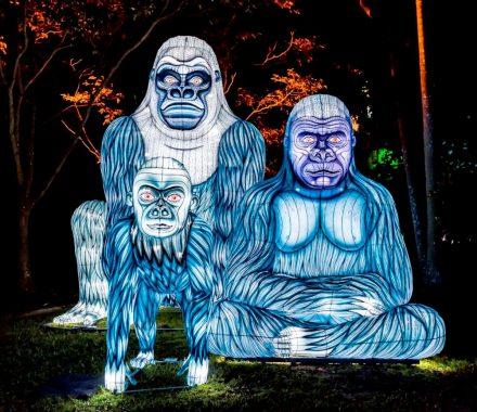 Taronga Zoo – Lights for the Wild @ Vivid Sydney 2017