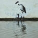 banksy roller stork 1st Apr, 2010