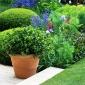 telegraph-garden-chelsea-flower-show-2014-11