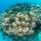 diving-reef