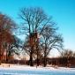 woodpecker-hotel-winter
