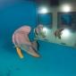 manta-underwater-hotel-2_0