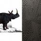 dwarf-rhino