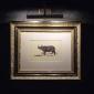 moooi museum of extinct animals salone milan 2018 (3)