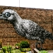 brooklyn-bird-10