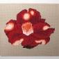 red_camellia