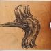 casuarius-johnsonii-gumbulgan-southern-cassowary-2011