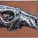 macropus-rufus-marlo-red-kangaroo-skull 2011