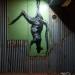 macropus-rufus-marlu-red-kangaroo-2011
