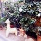 spazio-rossana-orlandi-courtyard