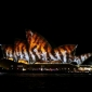 lighting-the-sails-vivid-sydney-2014-2