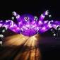taronga zoo funnel web spider vivid sydney 2017