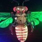taronga zoo wasp vivid sydney 2017