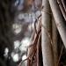 twigs-close-up