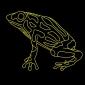 taronga zoo ferry corroboree frog vivid sydney 2017 (3)