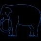 taronga zoo ferry elephant vivid sydney 2017 (2)