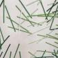 wallpaper handmade divina fabric alone milan 2017 (2)